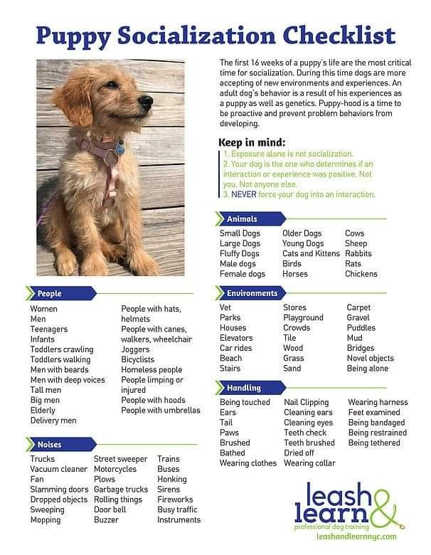 Pin By Elisabeth Weinerman On Dogs Training Safety And Health