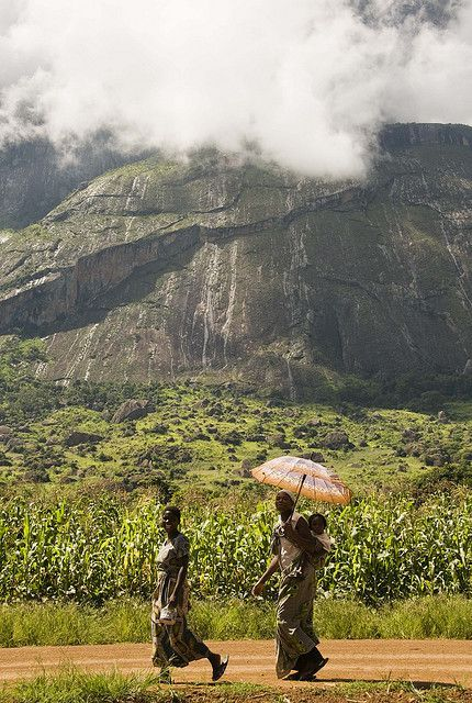 'Mulanje is the tallest mountain in south-central Africa, a rugged island in the sky that erupts in dramatic isolation from the gently undulating countryside.' Malawi: the Bradt Guide www.bradtguides.com