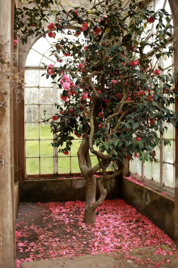 98 best images about indoor gardens on pinterest gardens for Camellia homes