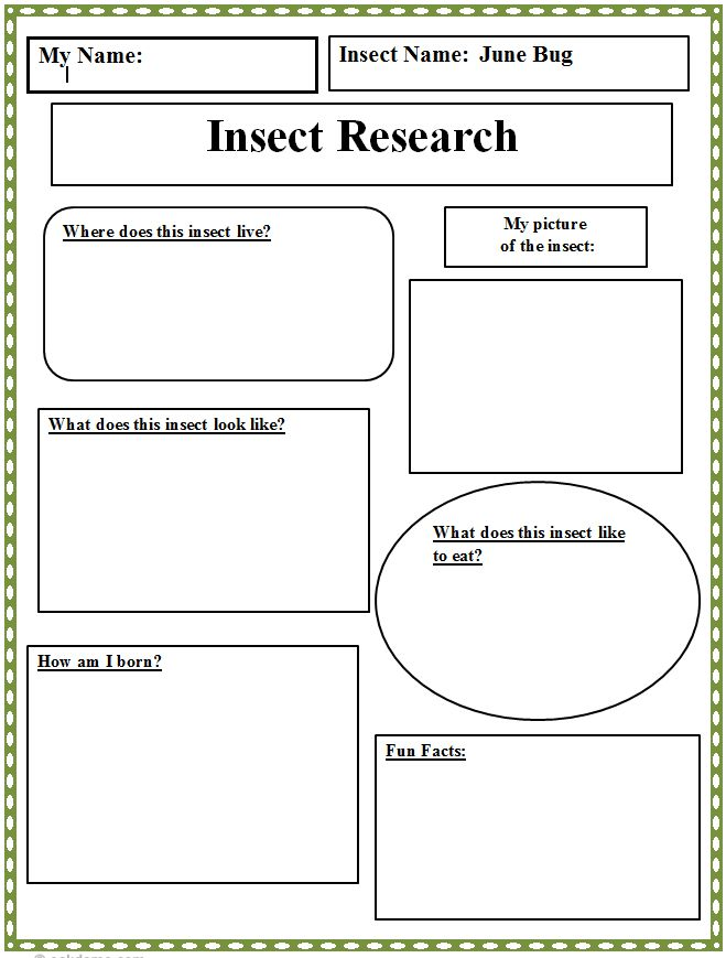 Insect Research Graphic Organizer Technology Lab border=