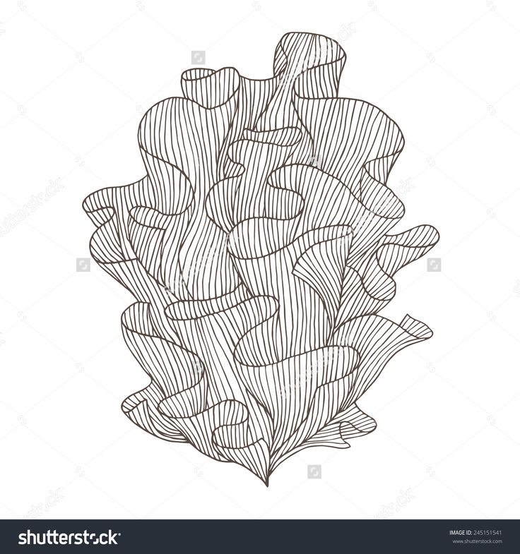 10 Best Coral Reef Drawing Images On Pinterest
