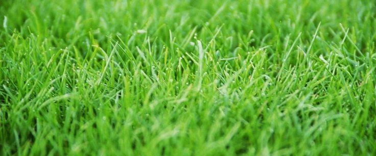 Comment scarifier une pelouse?