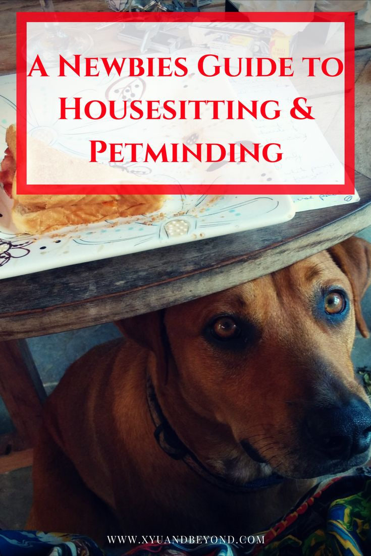 Housesitting is a win for your pets and your home. No worries about your furbabies or issues with the house.  via @https://www.pinterest.com/xyuandbeyond/