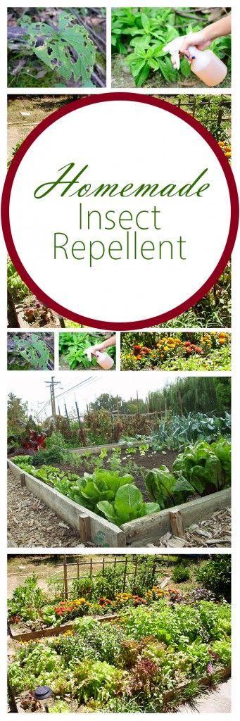 10417 Best Garden Pest Control Images On Pinterest | Gardening