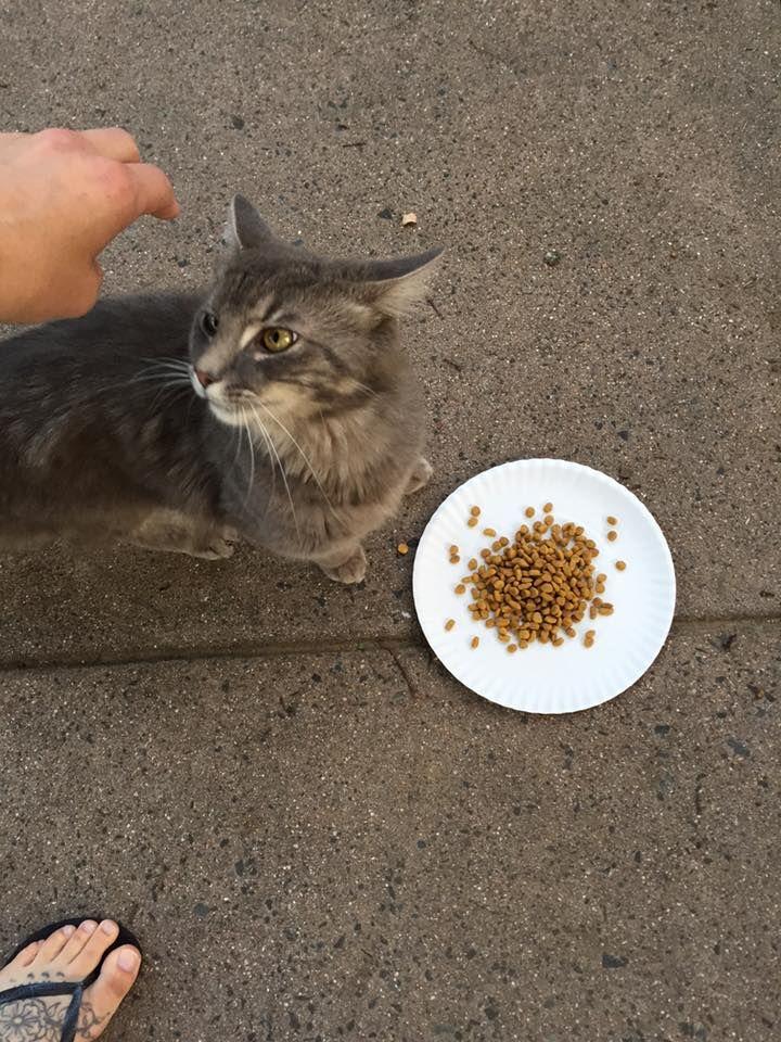 Julie AlbanoEnfield CT Open Forum July 13 · Found cat