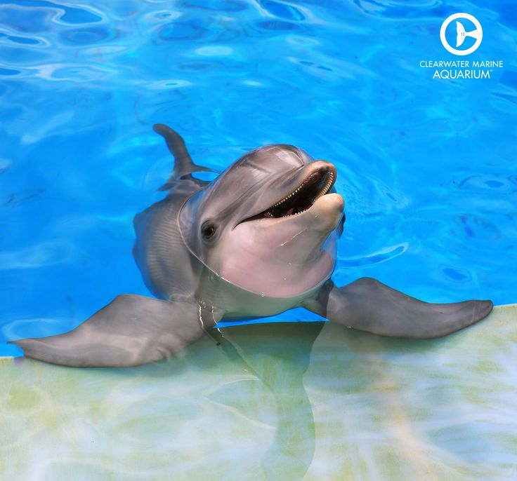 Dolphin's skin is slightly rippled which helps them swim faster.