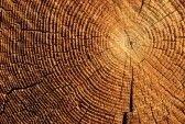 anelli di crescita per la fine di un tronco segato Brown photo
