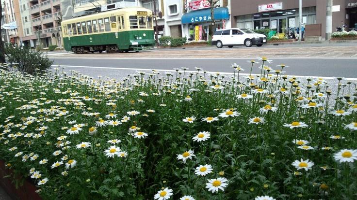 Shallow roadside flower and Nagasaki tram