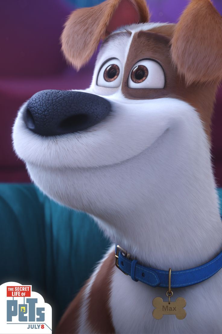 You can't deny Max's adorable puppy eyes. | The Secret Life of Pets | Now Playing