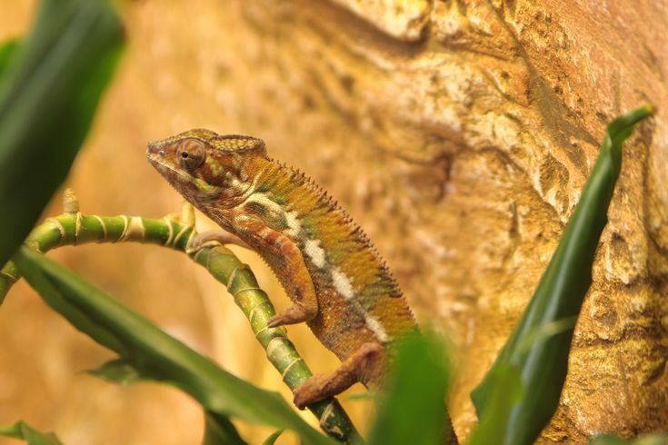What to see in Rome? the chameleon @bioparco!