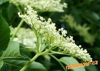domácí med a šťáva-sirup z květů černého bezu