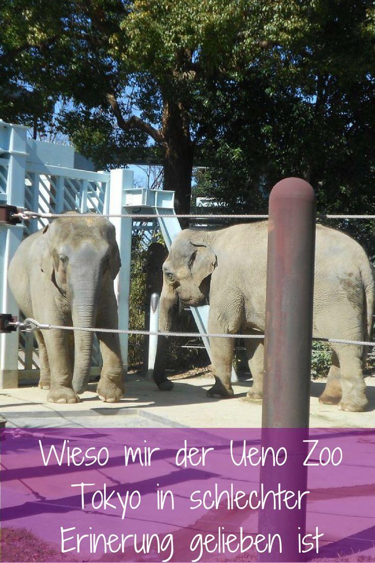 Lohnt sich ein Besuch im Ueno Zoo Tokyo? Und wie geht es eigentlich den Tieren im Zoo?