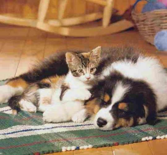See, dogs and cats can live together | Cats | Pinterest