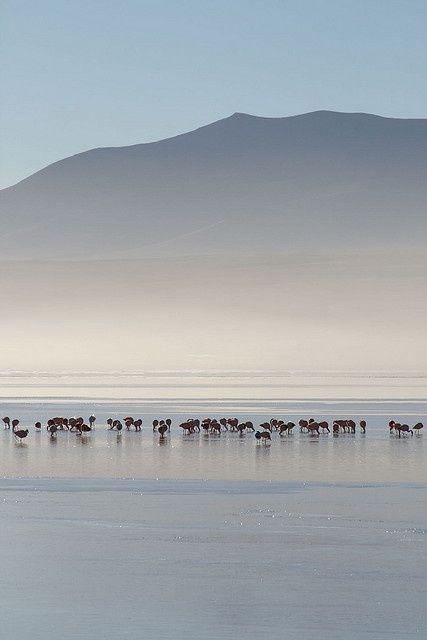 Salar de Uyuni. Salt flats, Bolivia.