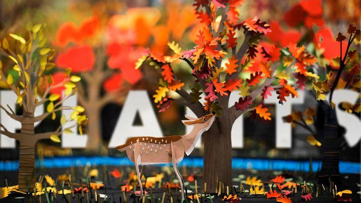 Paper to Plants on Vimeo