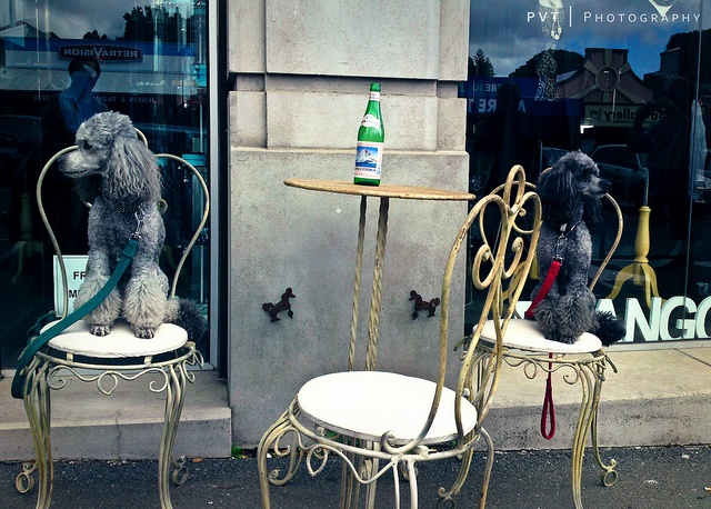 These Poodles sitting outside Frangos & Frangos in Daylesford were so cute and well-behaved     ...for training DVD's... http://www.trainingdogsvideos.com/