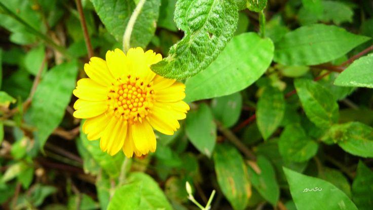 Flor que nace en medio de la maleza