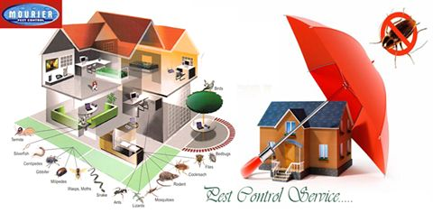 Finding a pest management service for achieving the best services of termite control and bed bugs control is also a task in Delhi/NCR.