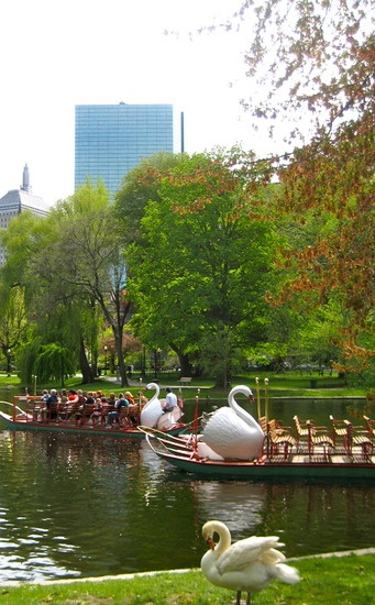 Swan Boats - Boston Public Garden.                As a small child, and as an adult with my nieces and nephews, I rode on the Swan Boats.
