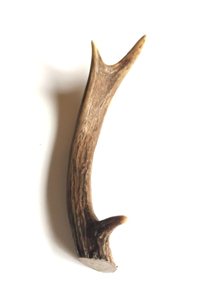 Deer antler dog chews from all naturally shed deer in the mountains of Utah. Deer antlers are great for your dogs, and they last a long time! Definitely one of the healthiest treats out there because