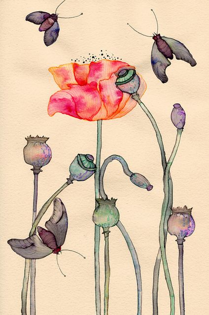 Shirley Poppy by Colleen Parker, via Flickr
