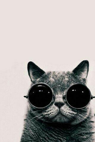 Nunca vi um gato tão estiloso