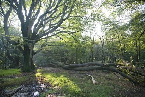 Walks in Shepton Mallet   Beacon Hill Wood   Somerset Walks