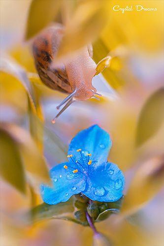"35PHOTO - Крылова Татьяна - ""Garden's Fairytale"""