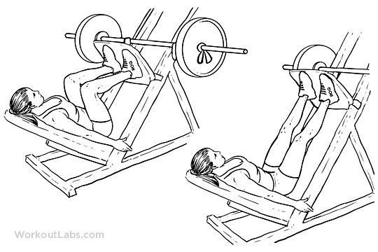 Leg Press / Machine Squat Press   Illustrated Exercise ...