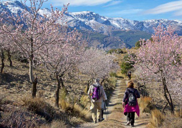 Descubre la Ruta de la Flor del Almendro en #Abla - Sierra Nevada, un espectáculo natural en #Almería  #almeriatrending