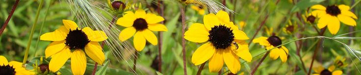 Native Plant Sources in PA