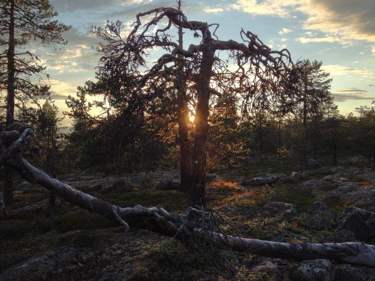 Sunset Lapland