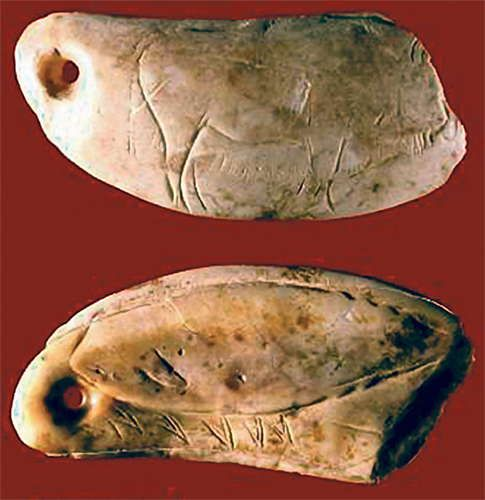 Upper Paleolithic Era Sperm Whale Tooth  --  Middle Magdalenian Period  --  Circa 13,400 Years Old  --  Engraved bison on one side, & a whale on the other  --  Excavated from Las Caldas Cave, Spain.