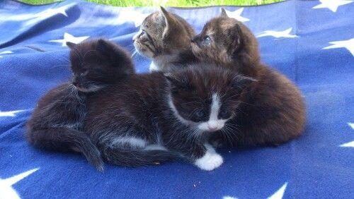 Gulliga kattungar