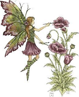 Angels, Archangels, Guardians, Spirit Guides and Elementals