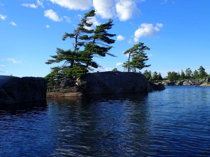 Windswept pines, Cunningham islands, July 2017