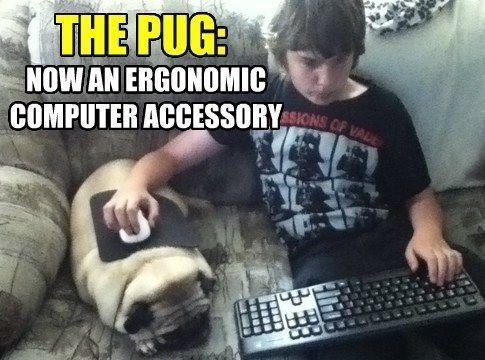 67 best Dog Memes images on Pinterest