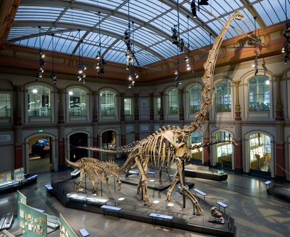Brachiosaurus brancai: the worl's tallest mounted dinosaur skeleton @Natural History Museum Berlin    © Museum für Naturkunde