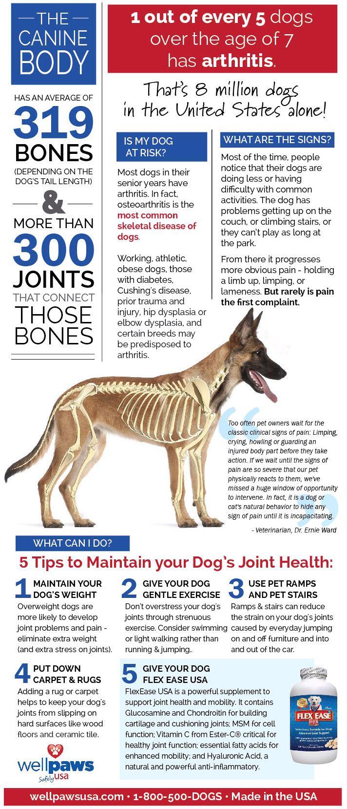 best vet school images on pinterest veterinary medicine dog