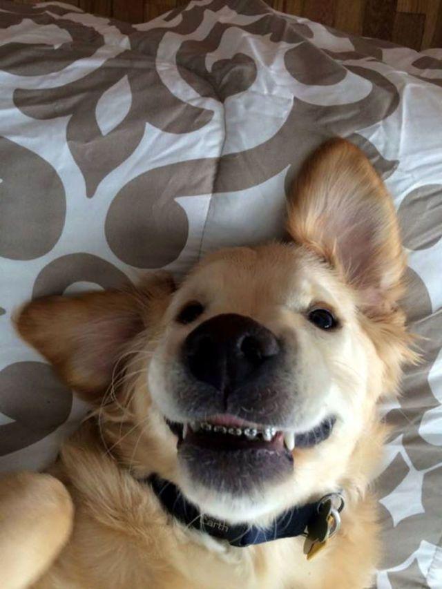 Wesley, il cane con l'apparecchio per i denti che calamita il tuo sguardo -cosmopolitan.it