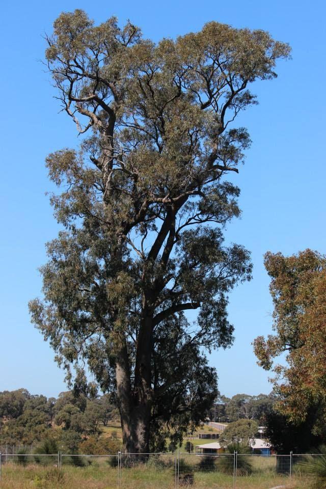 Big tree down in Orelia, more at Hotdog Wood on face book.