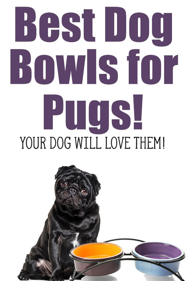 5 Of The Best Bowls For Pugs To Avoid Bloat Pugs Black Pug