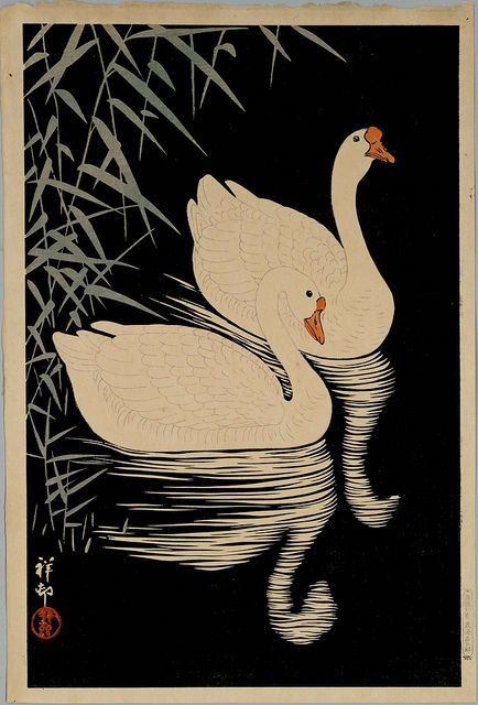 Swans (date unknown) by peacay, via Flickr