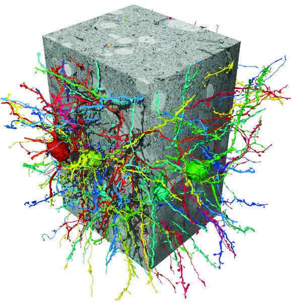 the function of the brain is based on the connections