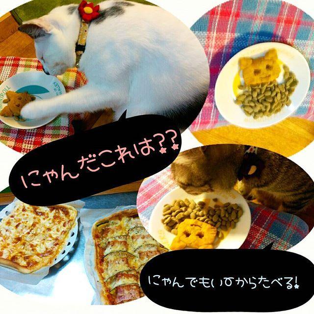 日付変わってしまったけど💦  ハロウィンのディナーは、猫オバケ風かぼちゃ😾👻🎃 超がつく適当な感じ😅  ちょいちょいするチャーリーと、とりあえず食べてみるマーリー😁  食べないのわかってたし!😂 パパとママは手作りピザ🍕✨ かぼちゃベーコンとシーフード🍴  一応ハロウィン気分を味わえたかな~😆 それでは#おやすみにゃさい 😪  #charlie_marley#catstagram#catlover#catoftheday#caturday#halloween#lazycat#rescudecat#browntabby#bicolorskinkytail#もちぽよ部#ぐうたら猫#保護猫#キジトラ#白黒ねこ鍵しっぽ#ハロウィンごはん#今日のにゃんこ#愛猫#チャーリーとマーリー