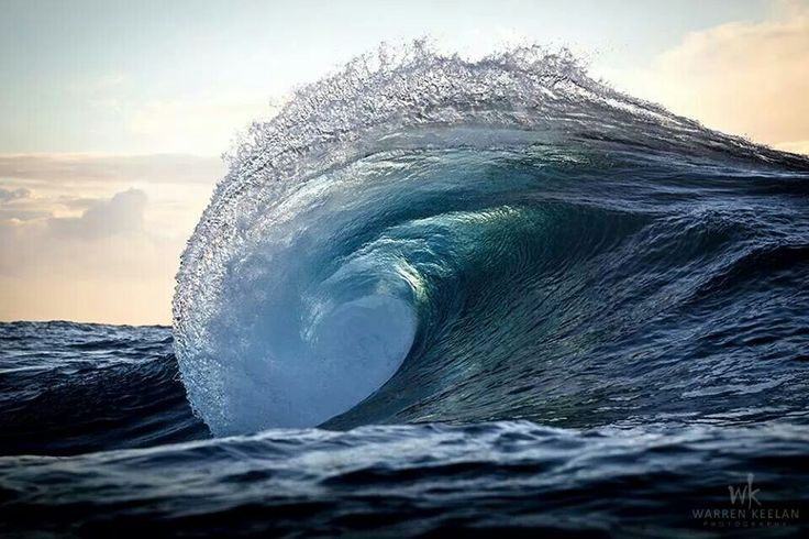 Nautilus by Warren Keelan