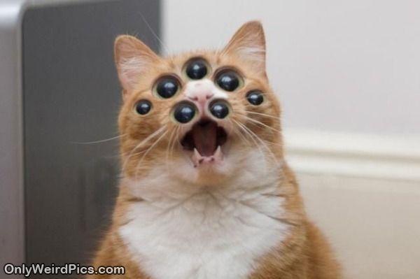 35 Best Images About Spidercat On Pinterest Weird