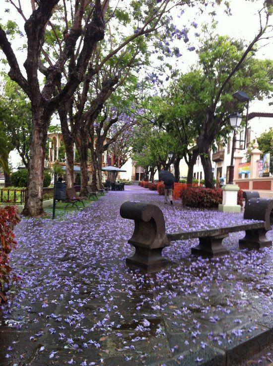 o                                                                                                                                                                                                                                                                                                                          Orotava Tenerife
