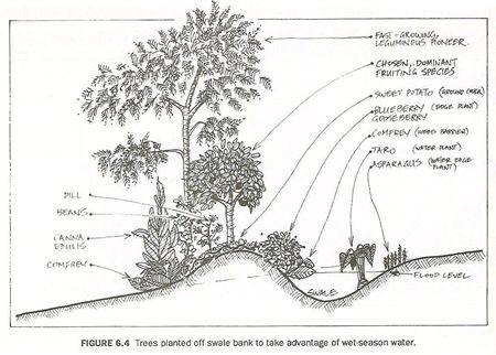 Useful traditional skills 2: water harvesting