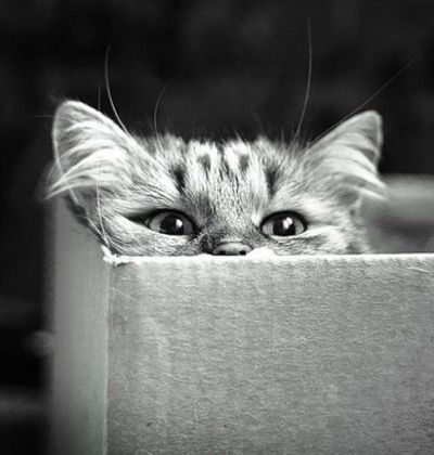 They told me to think outside the box, but I prefer to think inside it !!